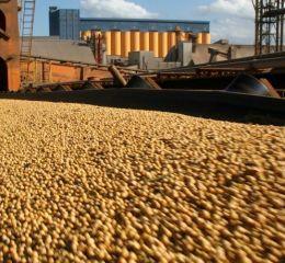 Cambios en retenciones bajarán el precio de la soja y favorecerán a China