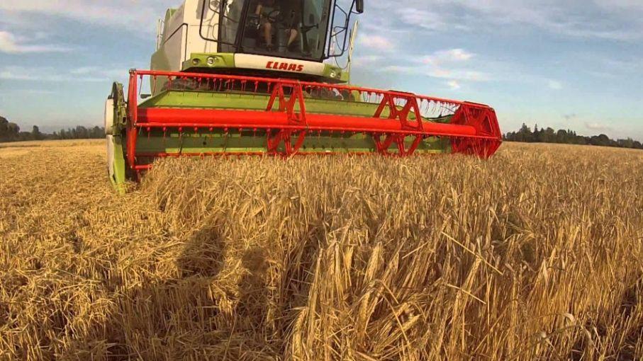 Proyectan 14% más de producción de cebada en áreas de la Bolsa de Cereales bahiense