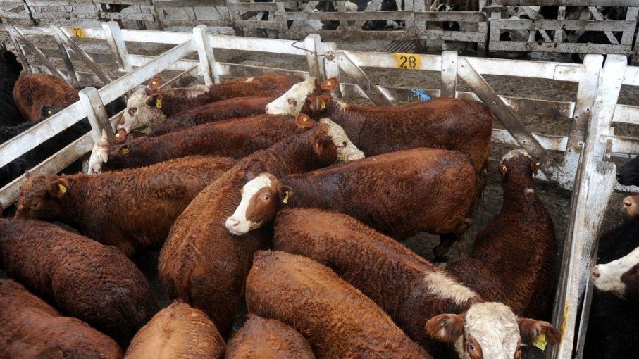 Carne: las nuevas medidas impactan en el Mercado de Liniers