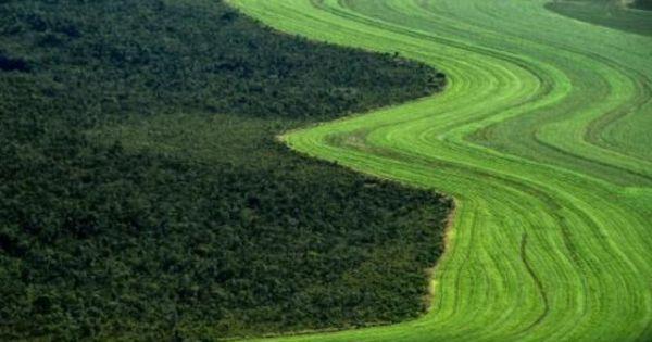 La sabana de Brasil retrocede ante los cultivos de soja y la ganadería - Agrolatam