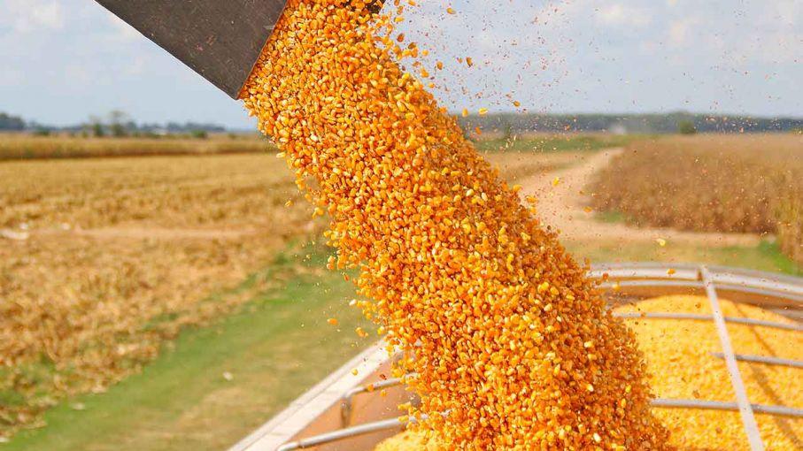 Estiman producción de 5,7 millones de toneladas de maíz en áreas de la Bolsa de Cereales bahiense
