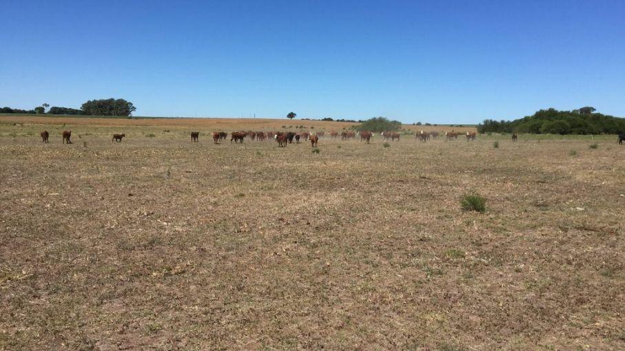 Sequías: impactos en la Argentina