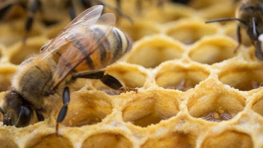 """""""Buenos Aires es el mayor productor de miel del país"""""""