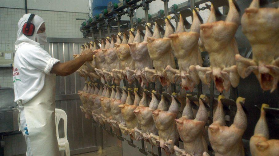 Importante crecimiento de las exportaciones aviares