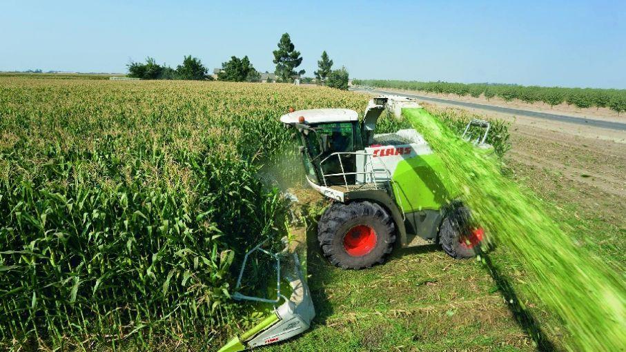 Buenos rindes en las primeras cosechas de maíz en el norte de Santa Fe