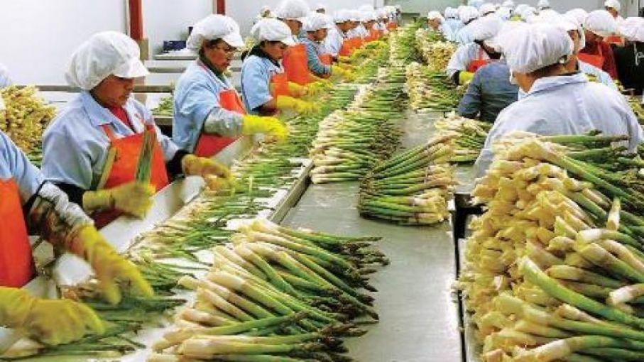 En Perú la Agroindustria fue el principal creador de empleo en el ...