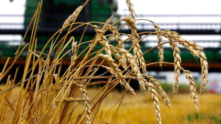 El trigo juega sus fichas a la recuperación 2021/22