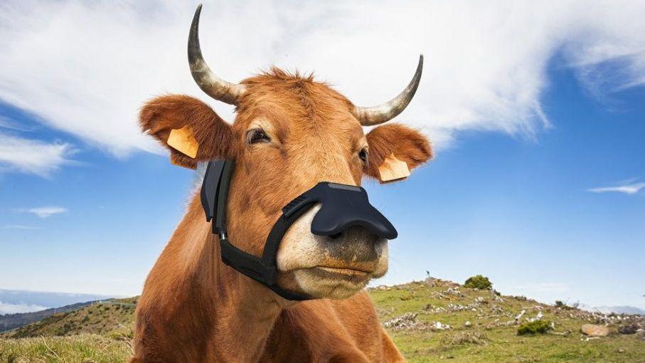 Un invento 'argentino' para controlar la emisión de GEI de las vacas