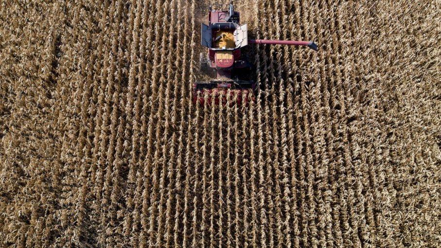 Repuntan los precios de los granos en el Mercado de Chicago