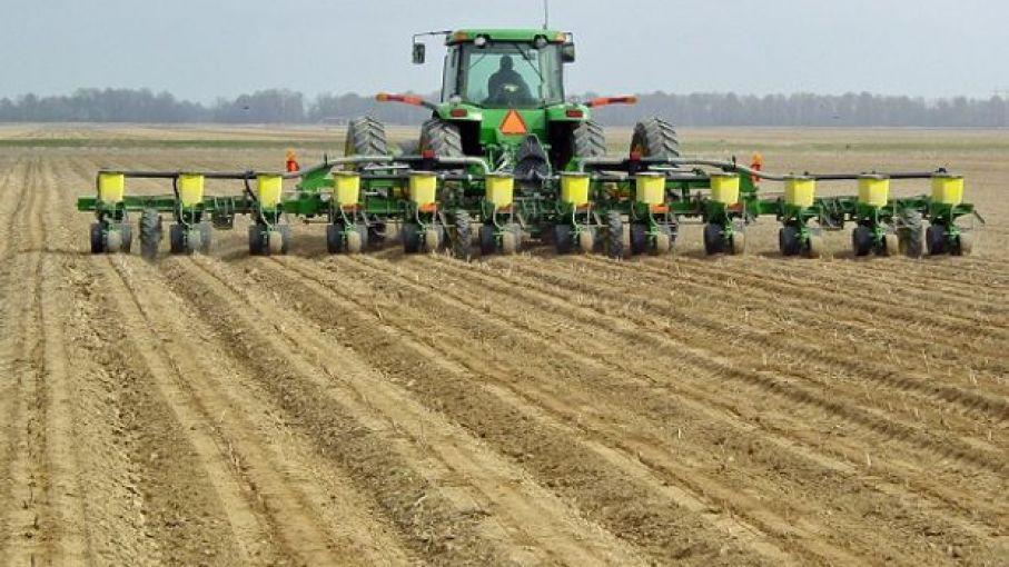 Área implantada de maíz finalizó en 1,52 millones de hectáreas en zonas de Buenos Aires y La Pampa