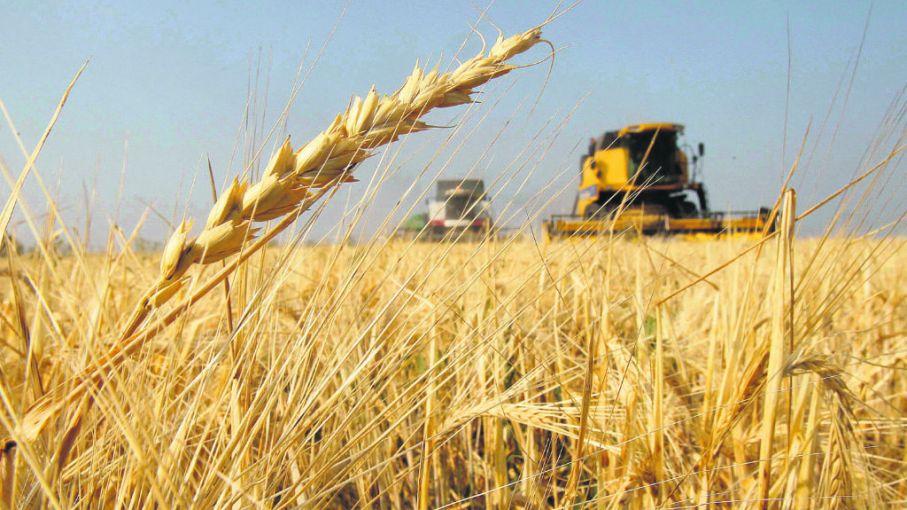 Panorama positivo para la nueva campaña del trigo