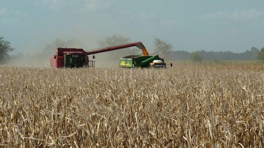 La industria semillera celebró el inicio de la cosecha de maíz 2020/21