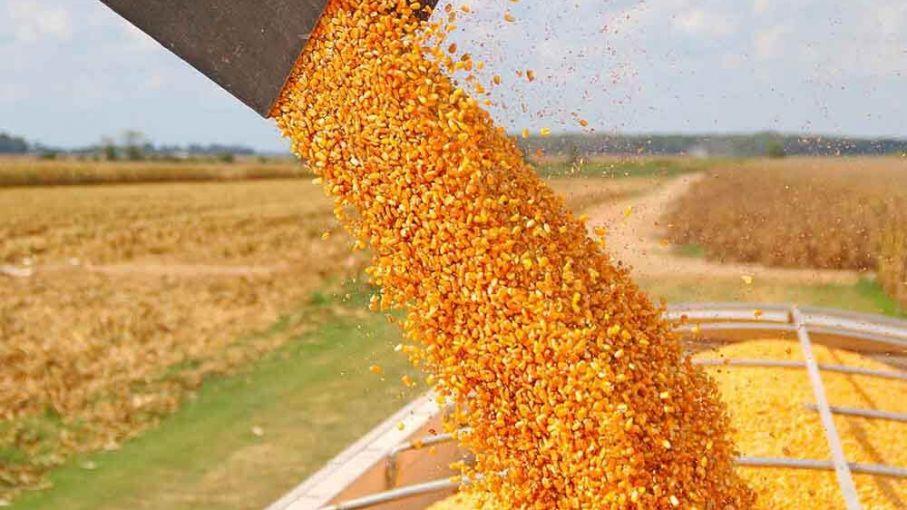 Comunicación oficial sobre las ventas al exterior de maíz