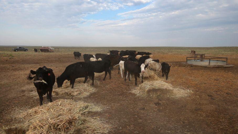 Salta declaró la emergencia agropecuaria en dos departamentos a causa de la sequía