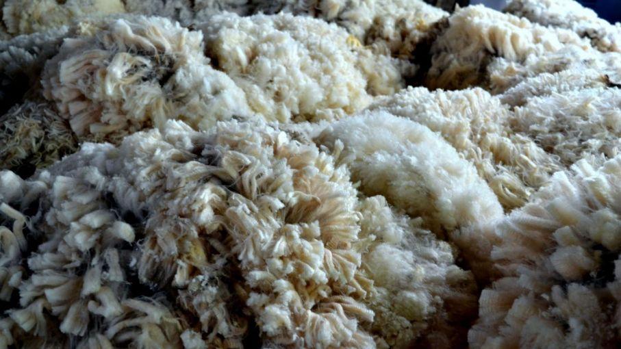 En Neuquén acumulan dos zafras de lana con un volumen de 121.000 kilos