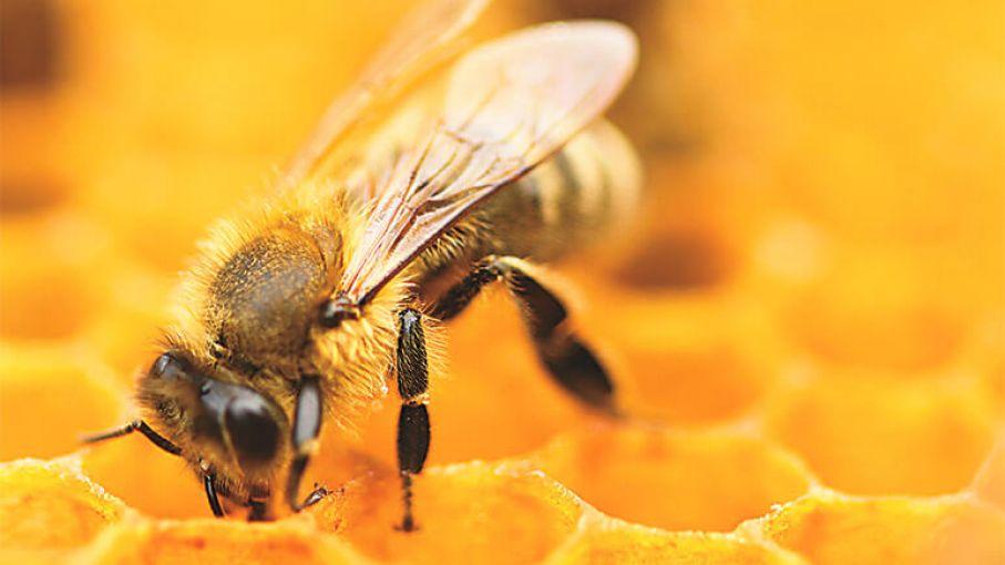 Pierden $500 mil en un cargamento de abejas en San Luis