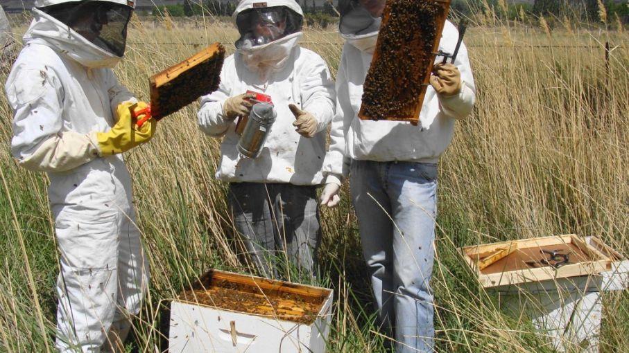 La producción pampeana de miel gana terreno y ya exporta a EEUU, Europa y Japón