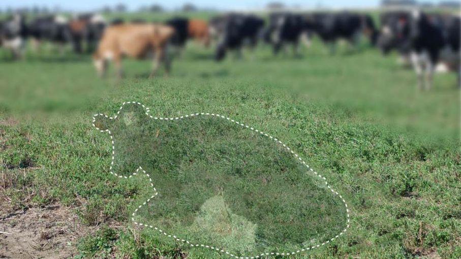 ¿Cómo sería un mundo sin vacas?