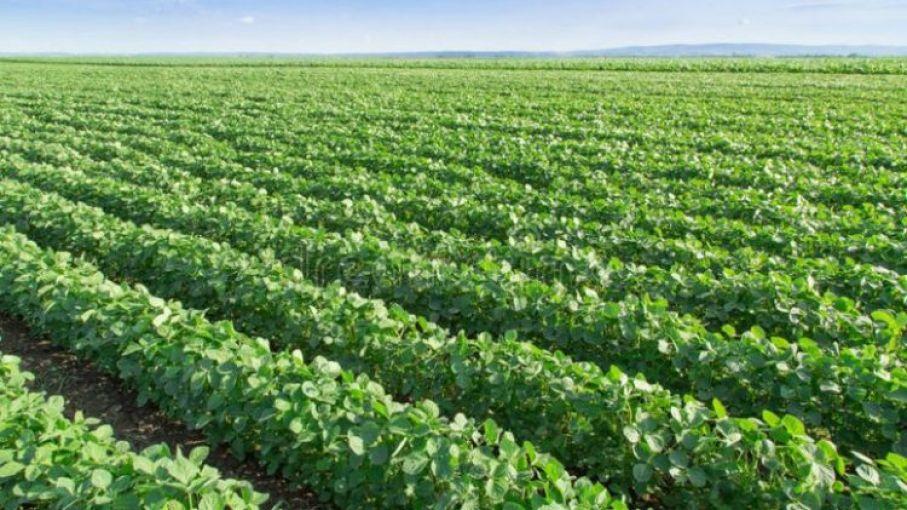 Cosecha de soja: pérdidas de US$ 1.300 millones