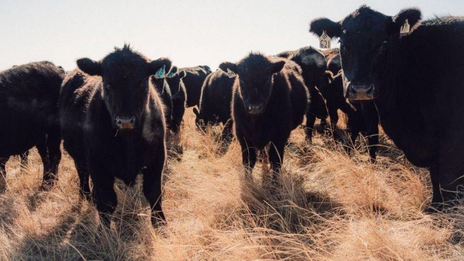 'Veganismo ético': una amenaza creciente para la ganadería