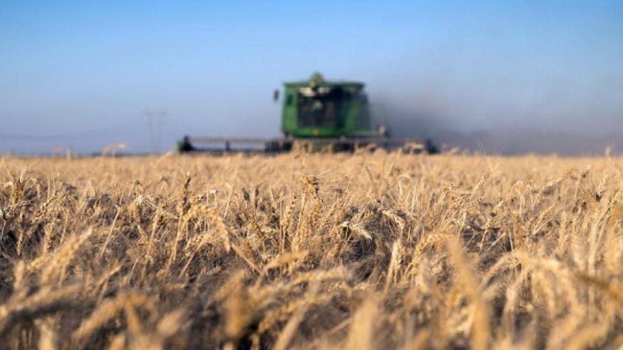 Los registros de exportaciones de trigo ya alcanzaron el 90% del saldo exportable