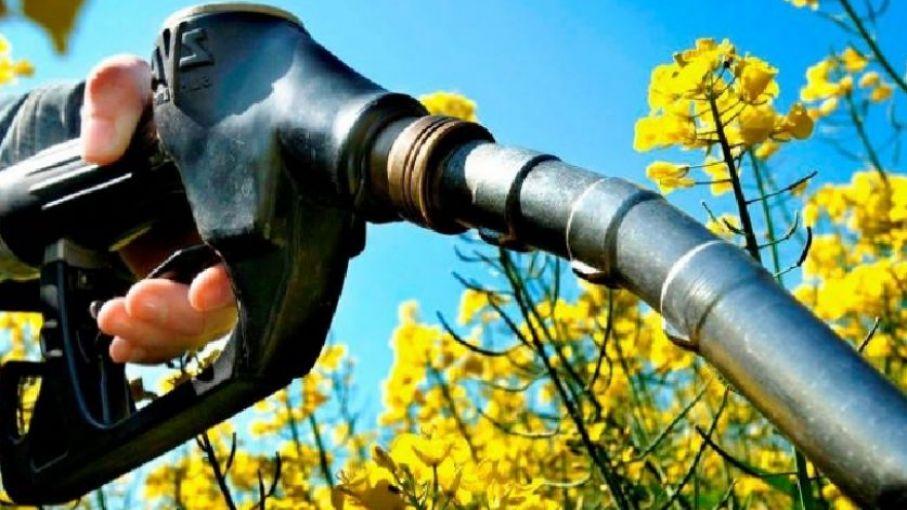 La producción de biodiesel cayó 90,1% y la de bioetanol 18,1% en el 4° trimestre de 2020