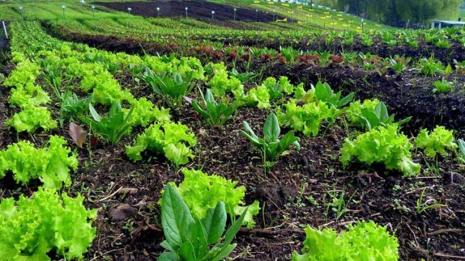 En 2020 se certificaron 132 mil toneladas de producción orgánica y se cosechó un 20% más que en 2019