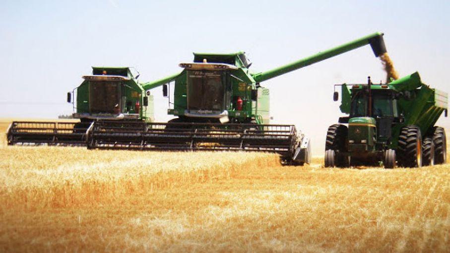 Estiman que por alza de precios cosecha estival generará más de US$ 14.000 Millones
