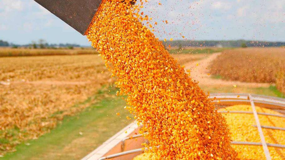 Cosecha de maíz en campos bonaerenses demorada por falta de piso