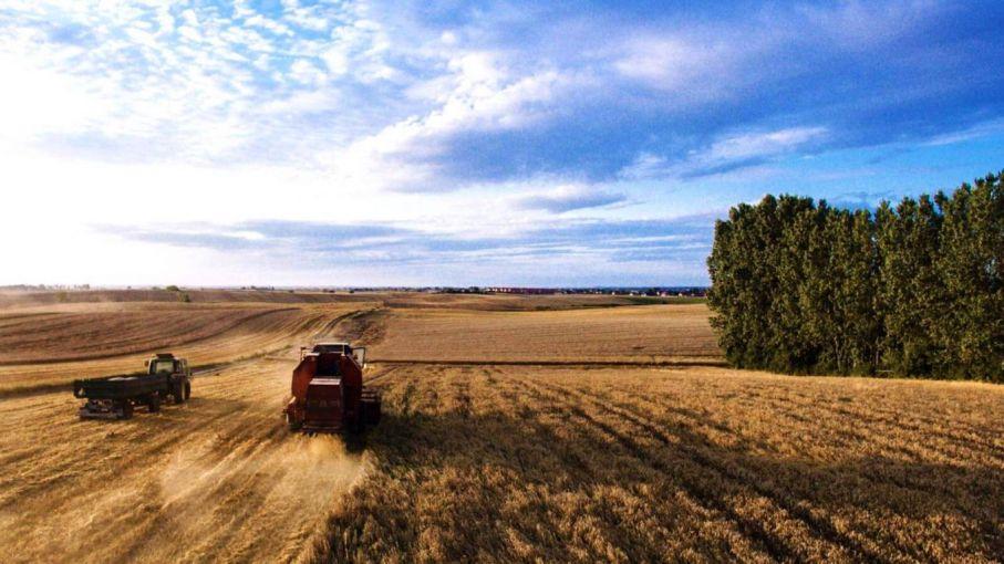 Pronostican mayor producción y áreas sembradas para la campaña 2021/22