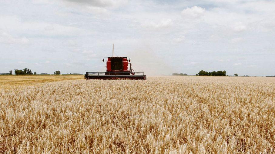 Advierten que las heladas de los últimos días pueden llegar a afectar el rendimiento del trigo