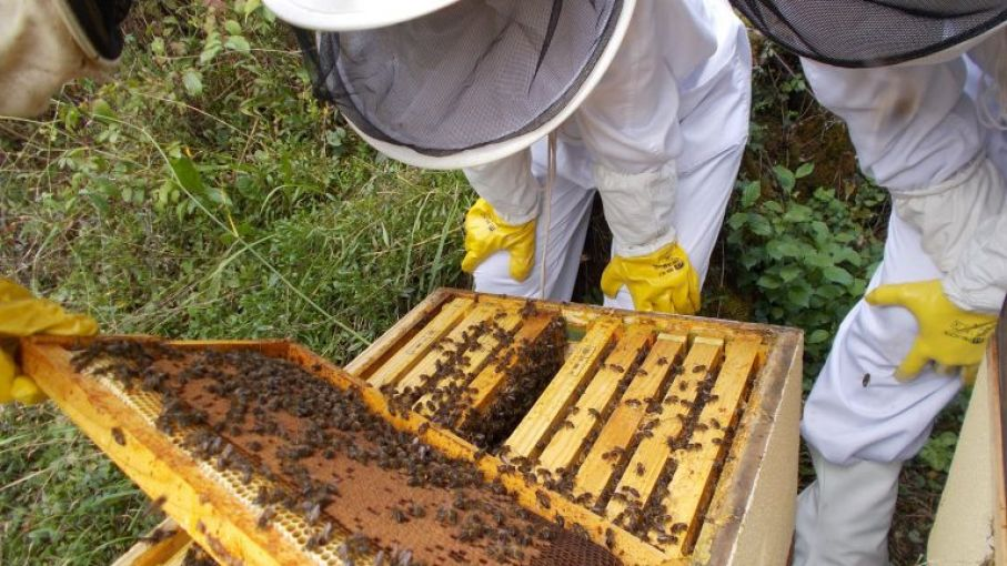 Créditos blandos a productores y kit a apicultores para combatir plaga que afecta a colonias de abejas en San Luis