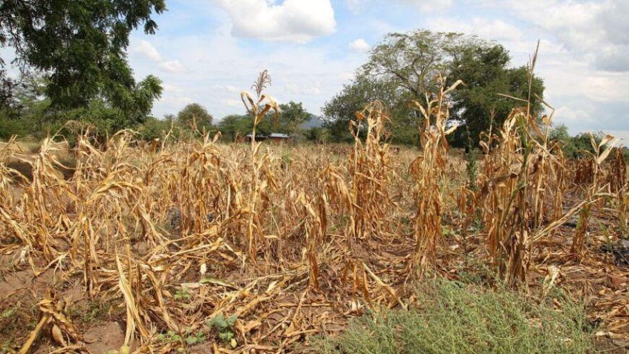 Misiones analiza declarar la emergencia agropecuaria por la sequía